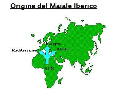 Origine ed evoluzione del suino iberico (I)
